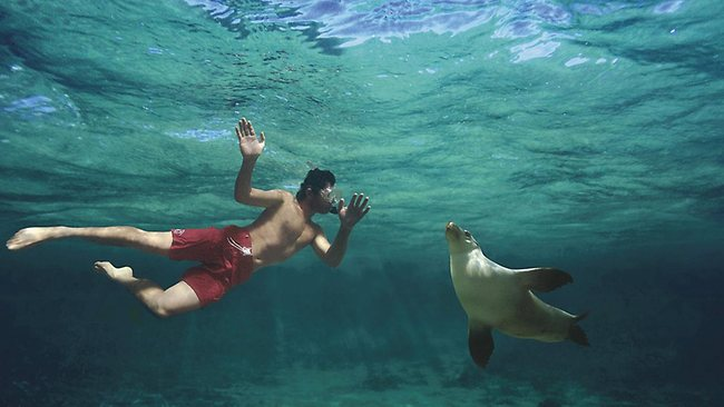 "Swimming with the seals at Baird Bay would be part of the work for a ""wildlfie caretaker"" in South Australia in Tourism Australia's latest Best Jobs in the World campaign."