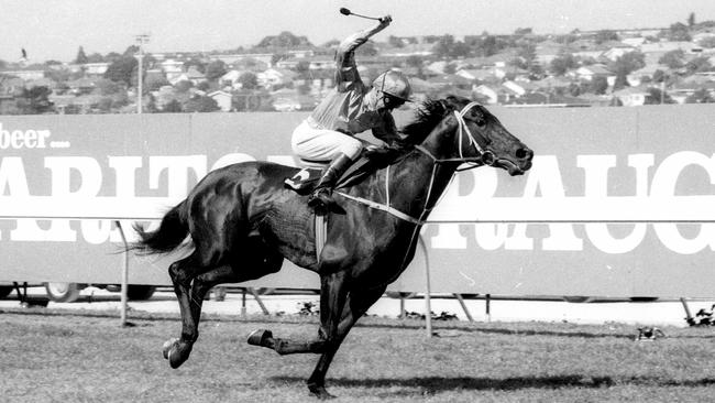 Three-time Cox Plate winner Kingston Town is from the same family as Coolmore's super colt Australia.