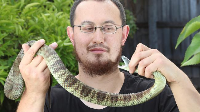 Snake catcher Mark Pelley with a tiger snake, which he says are rife in Diamond Creek. Picture: Alex Coppel.