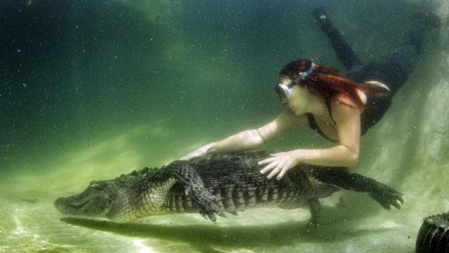 Lawrence dives with an massive reptile. Picture: Caters