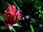 <p>Gymea lilies are spectacular Australian native plants with large red flower heads atop a single stem stretching up to 6m.<br /> <br /> Picture: Nick Cubbin</p>