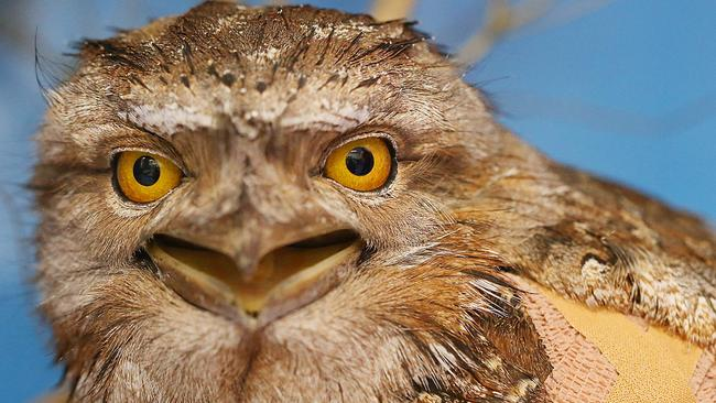 """""""I should be working but instead I'm googling how to have owls as pets."""""""
