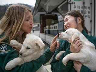 Dogs rescued from slaughter in South Korea. Picture: Humane Society International