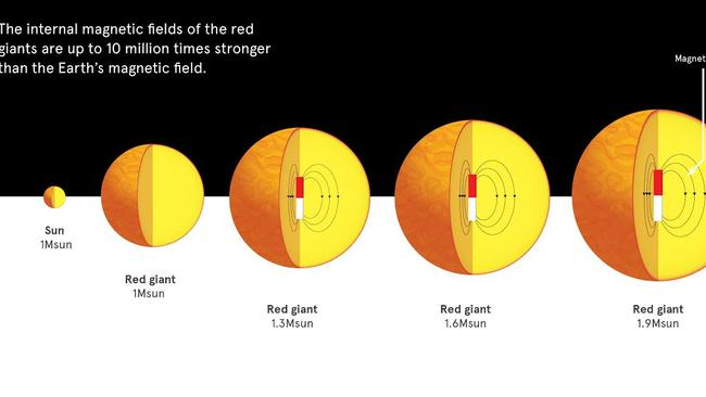 Strong magnetic fields ... stars like the sun become red giants towards the end of their lives. The red giants of the same mass as the sun do not show strong magnetic fields in their interior, but for stars slightly more massive, up to 60 per cent host strong magnetic fields. Picture: Nature/University of Sydney