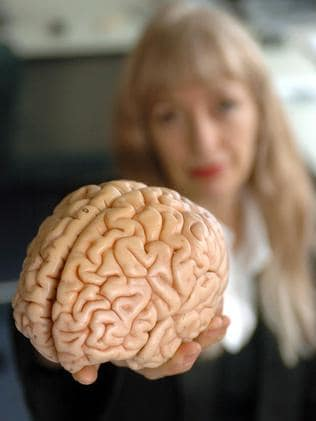 Not a suspect ... Professor Susan Greenfield with a model of a human brain.