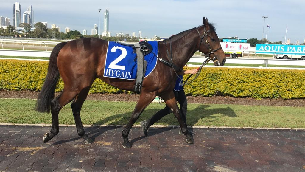 The Michael Costa-trained Malkara won the Aquis Park Class 2 Handicap (1200m) at the Gold Coast on Saturday, August 12. Photo: Supplied.