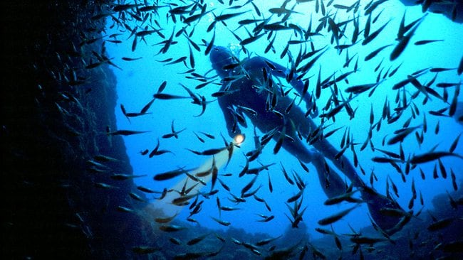 Sleeping with the fishes. A diver at Lord Howe Island. Picture: Supplied