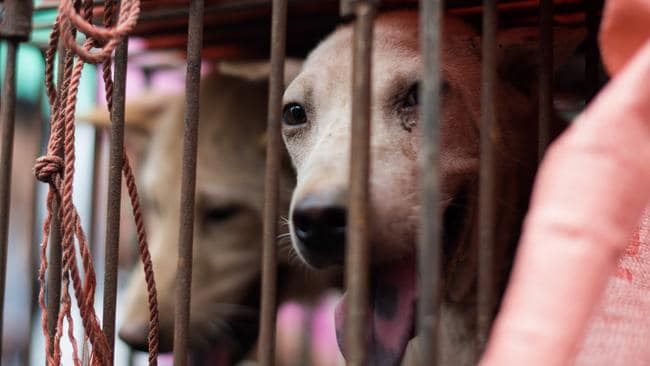 The dog meat trade has traditionally been associated with China. Picture: Johannes Eisele/AFP