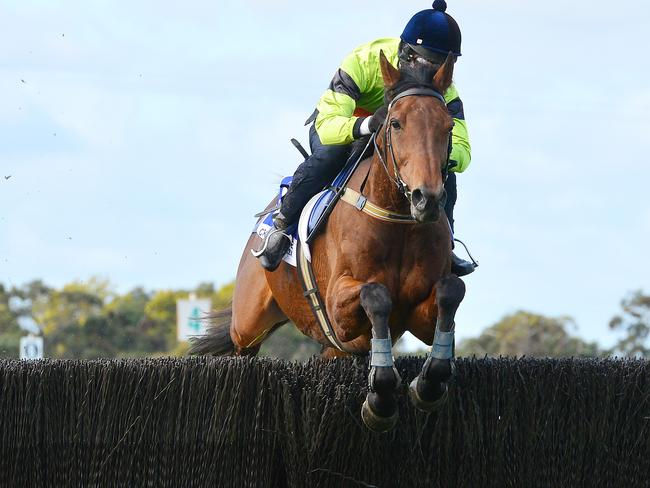 Australian Jumps Racing | Bashboy