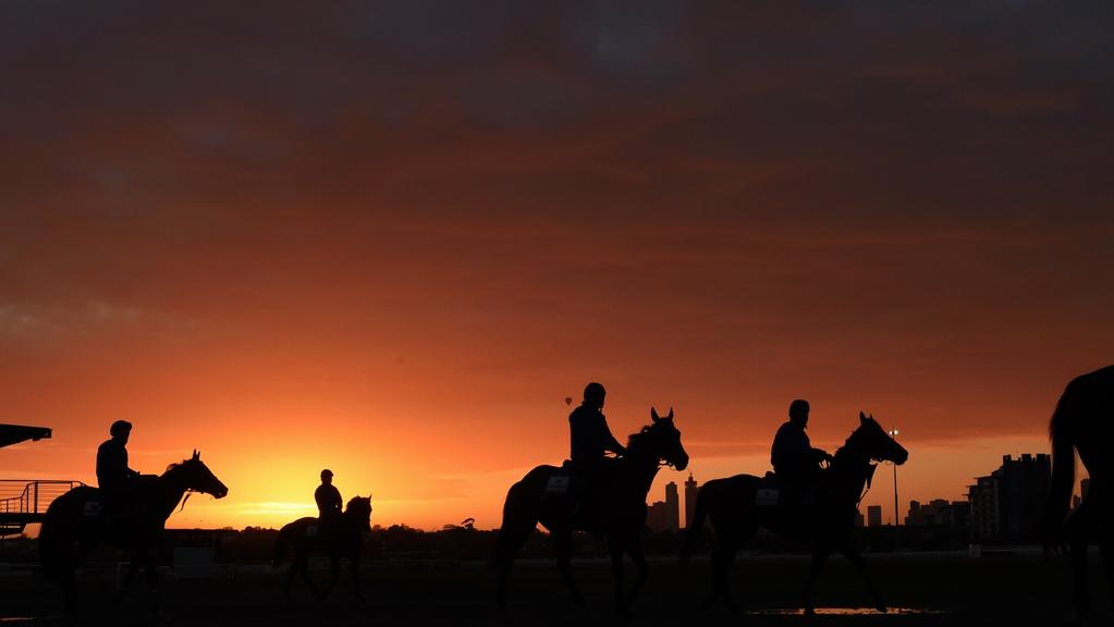 Race horses at Flemington racetrack preparing for the Spring Carnival Melbourne. Picture: Nicole Garmston