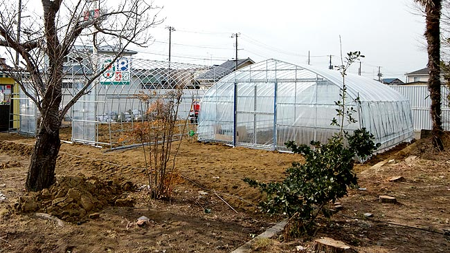 This greenhouse area is available for residents to grow fruit and vegetables after losing so many crops to the wave / Picture: Helen Davidson
