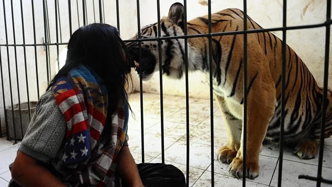 The feline's mutual ... Abdullah and Mulan. Picture: Robertus Pudyanto/Getty Images