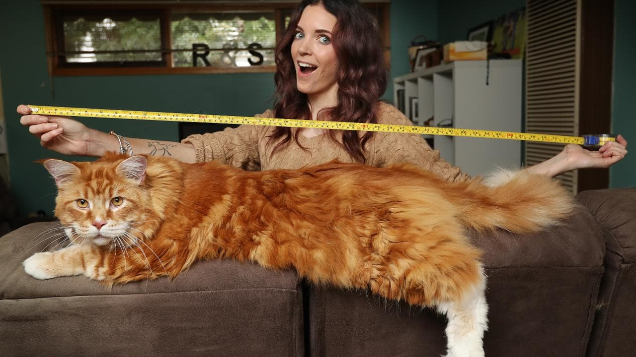 kids news longest cat
