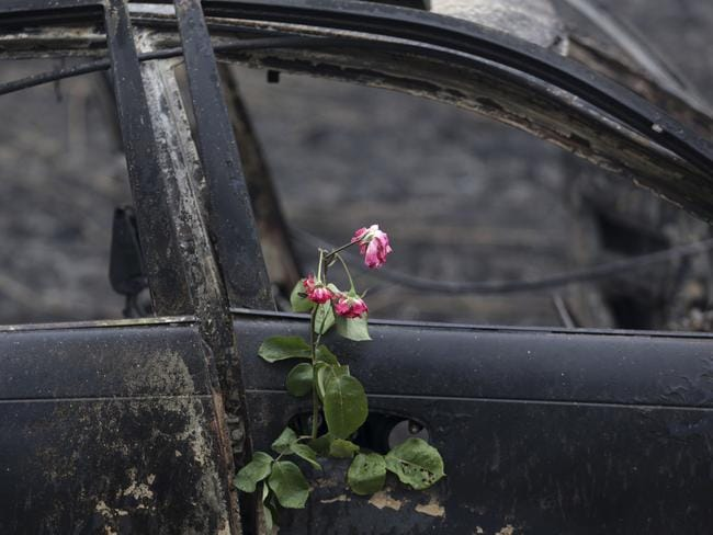Roses were placed on the remains of a car in which a woman was killed after going off the road in the village of Nodeirinho, near Pedrogao Grande. Picture: Armando Franca/AP