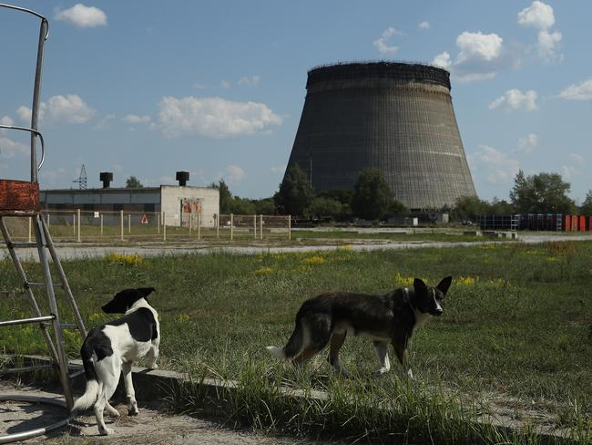 Stray dogs hang out near an abandoned, partially-completed cooling tower at the Chernobyl nuclear power plant. Picture: Sean Gallup/Getty Images.