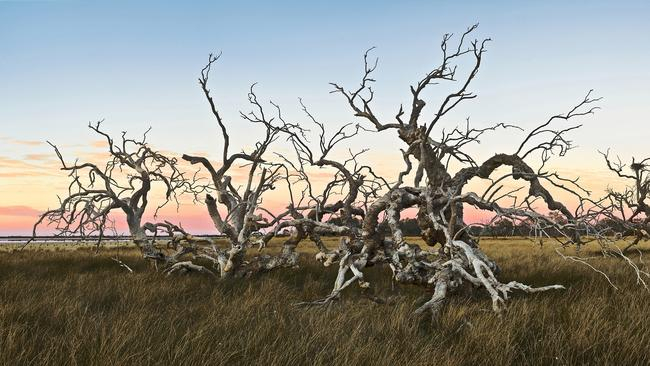 A weathered outback tree from Richard and Carolyn Green.