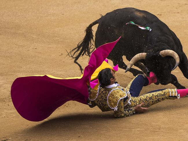 Not giving up ... Spanish bullfighter David Mora is tossed by an El Ventorrillo ranch fighting bull during a bullfight at Las Ventas bullring in Madrid, Spain.