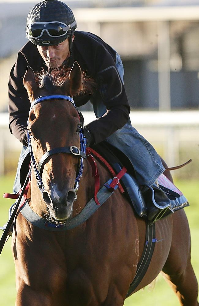 Damian Browne works Queensland's favourite galloper. Picture: Peter Wallis