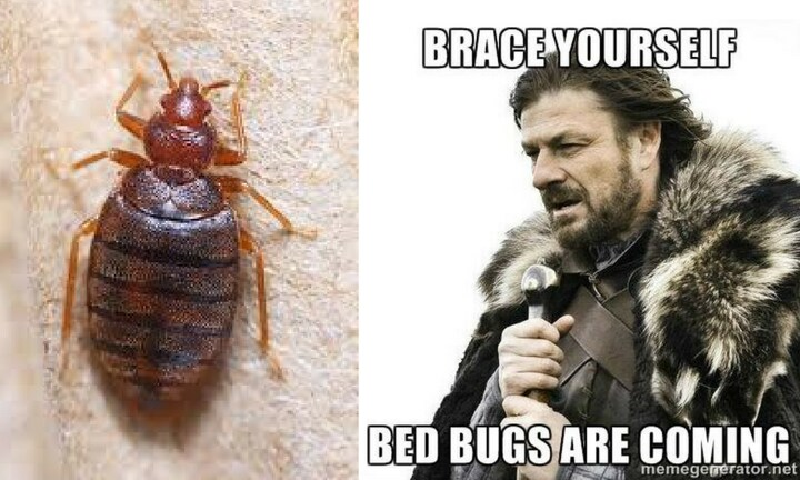 Very bad news: Bed bug populations have exploded to ungodly levels