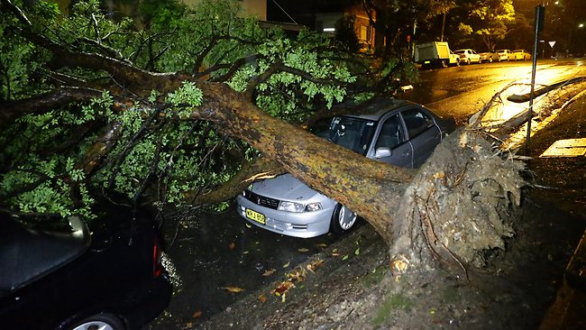 This massive tree falls on two cars at Artarmon. Picture: Bill Hearne