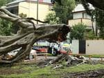 A Police Rescue truck helps with storm recovery after a tree is felled in Rozelle. Picture: Rohan Kelly