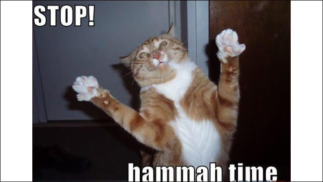 This is a LOLcat - it's killing you with kindness. Picture: Icanhazcheezburger.com