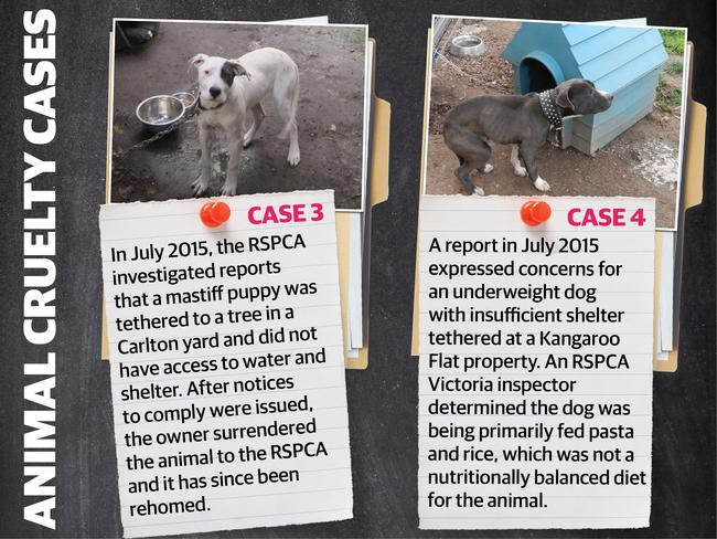 Rspca Animal Cruelty List Shows Melbourne S Southeast