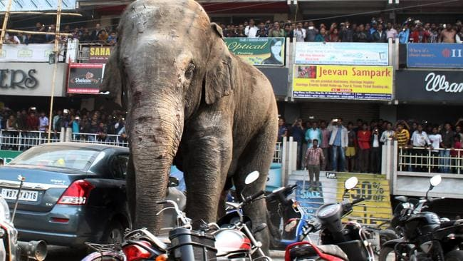 Indian bystanders watch as a wild elephant walks along a busy street in Siliguri on February 10, 2016. The adult male elephant was tranquillised and captured by wildlife officials and transported to a nearby forest. Picture: Diptendu Dutta/AFP Photo
