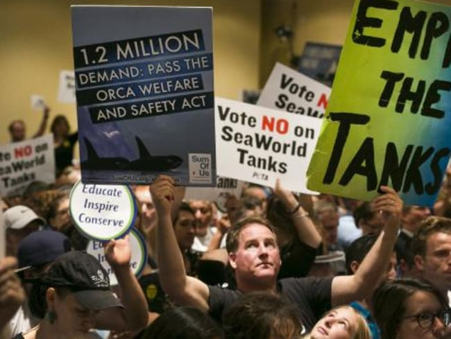 Outrage ... animal rights activists protest against whales being held in captivity. Picture: AP/Damian Dovarganes