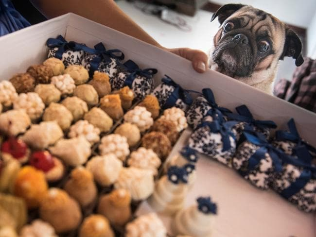 This dog has his eyes on the prize while looking at these wedding treats. Picture: DANIEL RIBEIRO / ISPWP / CATERS NEWS