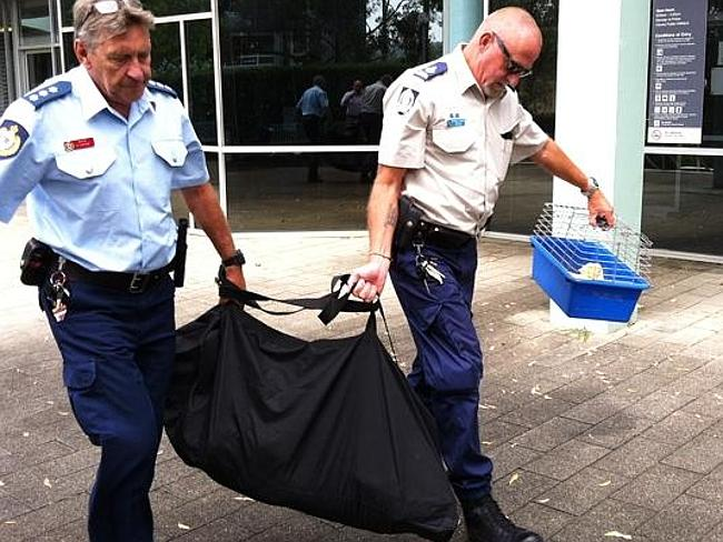 Officials carry the dead dog from the court. Picture: Richard Noone