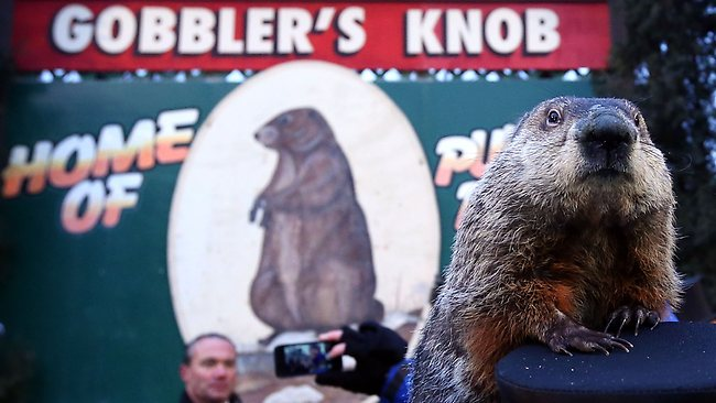 Groundhog Punxsutawney Phil climbs on the top hat of his handler.