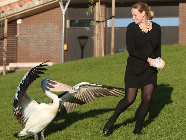 LOSING BATTLE: Jess Wyatt tried saving her lunch from the pelican in vain. Picture: Tait Schmaal.