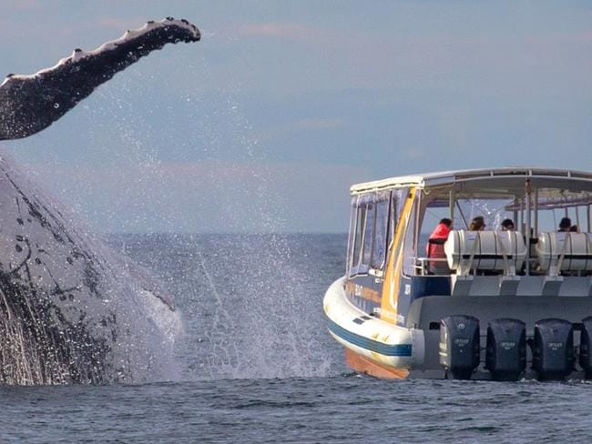 Brutally bad timing. Picture: John Goodridge/Whale Watching Sydney