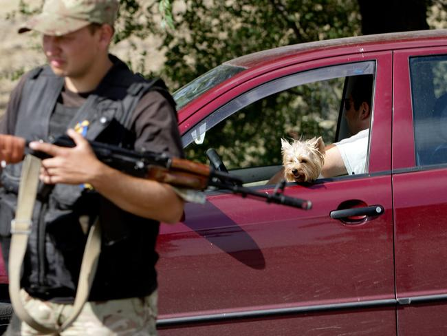 Fleeing in fear ... a dog looks out the window of a car queuing at a checkpoint as people flee the southern Ukrainian city of Mariupol in the Donetsk region.