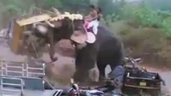Elephant goes on rampage during holy festival at Bhagavathi Temple in Kerala