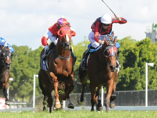 Oink (left) returns to a favourable hunting ground at Doomben. Picture: Grant Peters, Trackside Photography