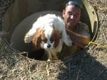 The RSPCA rescue dogs kept in an underground bunker on a Wheatbelt property during a raid on the puppy farm.