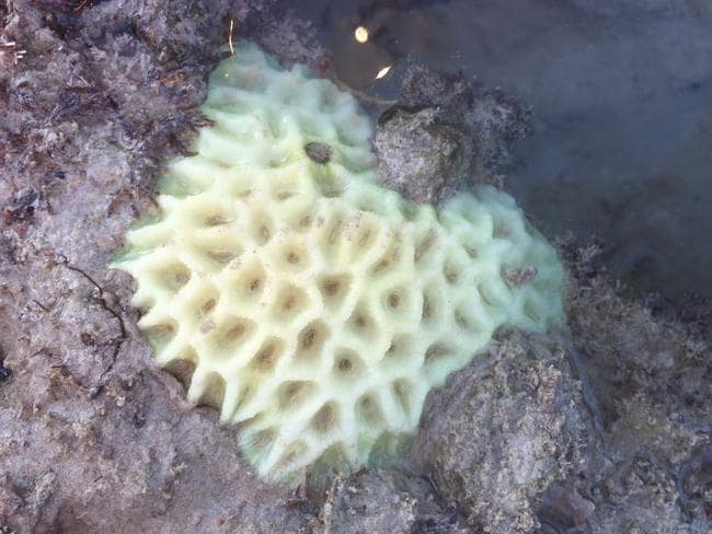 Bleached/dead coral from Cable Beach in Broome, WA. Picture: James Brown.
