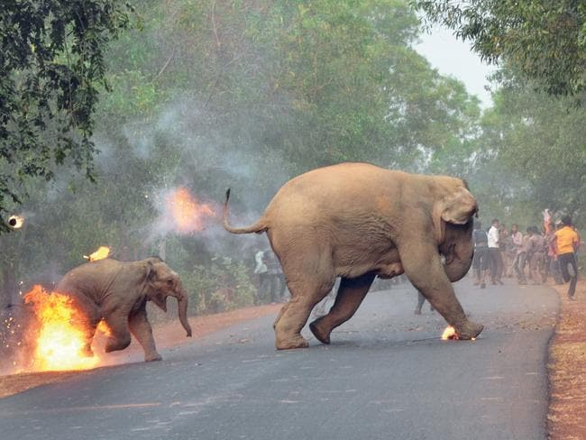 Biplab Hazra's award-winning photo titled Hell is Here. Picture: Biplab Hazra/Sanctuary's Wildlife