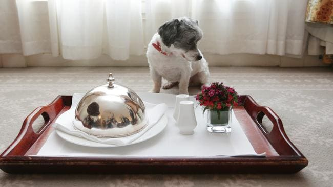 Dog food raw and paleo diets for dogs are taking off for Pet friendly luxury hotels