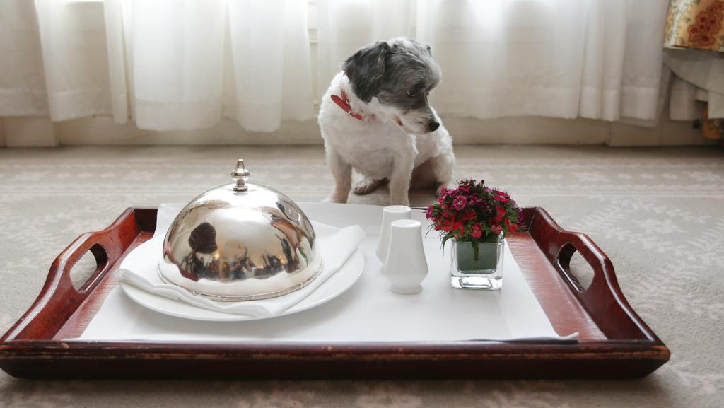 Dog food raw and paleo diets for dogs are taking off for Best hotels for pets