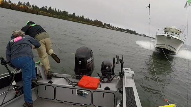 As the speedboat gets closer they have no option but to dive overboard. Picture: Salmon Trout Steelheader / Angling Oregon