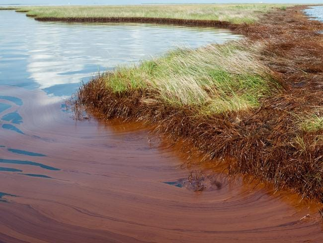 Spread ... Thick oil from the BP Deepwater Horizon oil spill floats on the surface of the water and coats the marsh wetlands in Bay Jimmy near Port Sulphur, Louisiana. Picture: AFP PHOTO/Saul LOEB