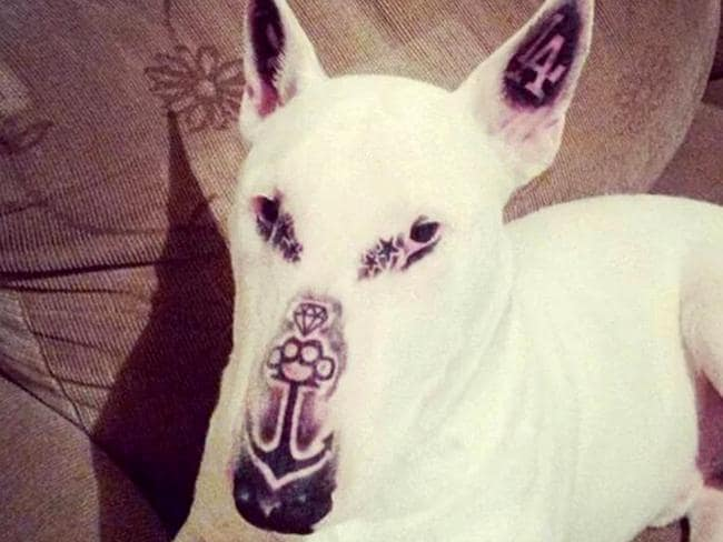 The dog's owner has been accused of animal cruelty. Picture: CEN/Australscope