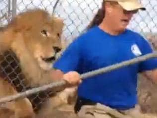 Supplied Zookeeper Jeff Harwell charged by lion that broke through fence