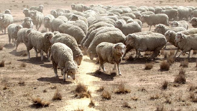There are fears of devastation that another drought would deliver to South Australian farmers.