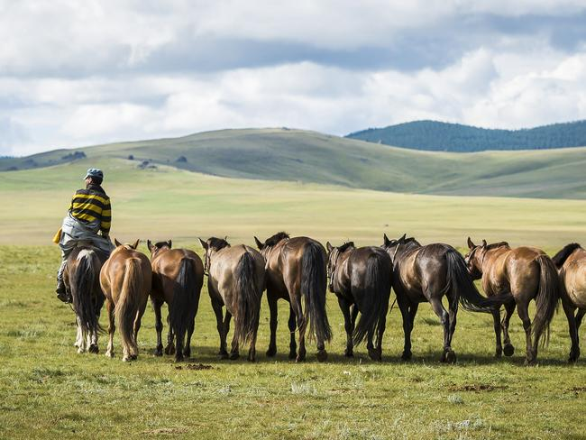 Herders find and train the horses. Picture: Richard Dunwoody