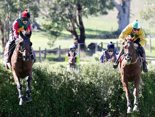 Berlioz (left), ridden by Tom Ryan, on his way to a steeplechase trial win at Oakbank this month. He runs in today's Brierly Steeplechase. Picture: Sarah Reed