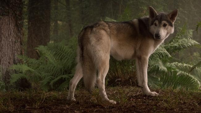 Nymeria needs to bring her pack fo wolves back to help Arya.